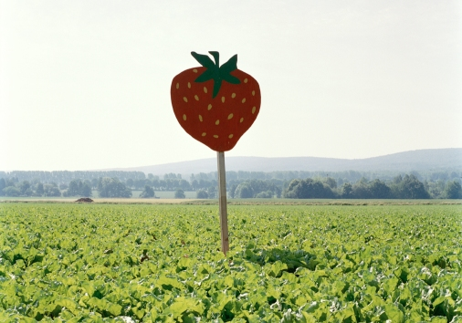 Silke Rokitta, Strawberry Fields, 2008